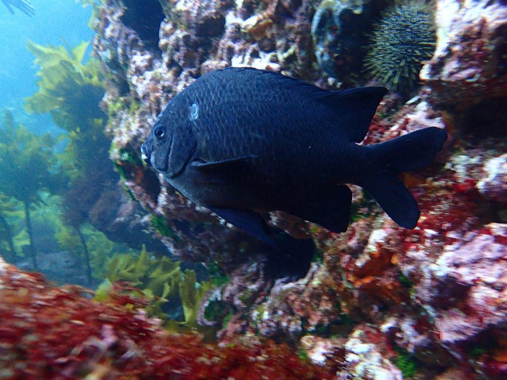 Fish in Tutukaka