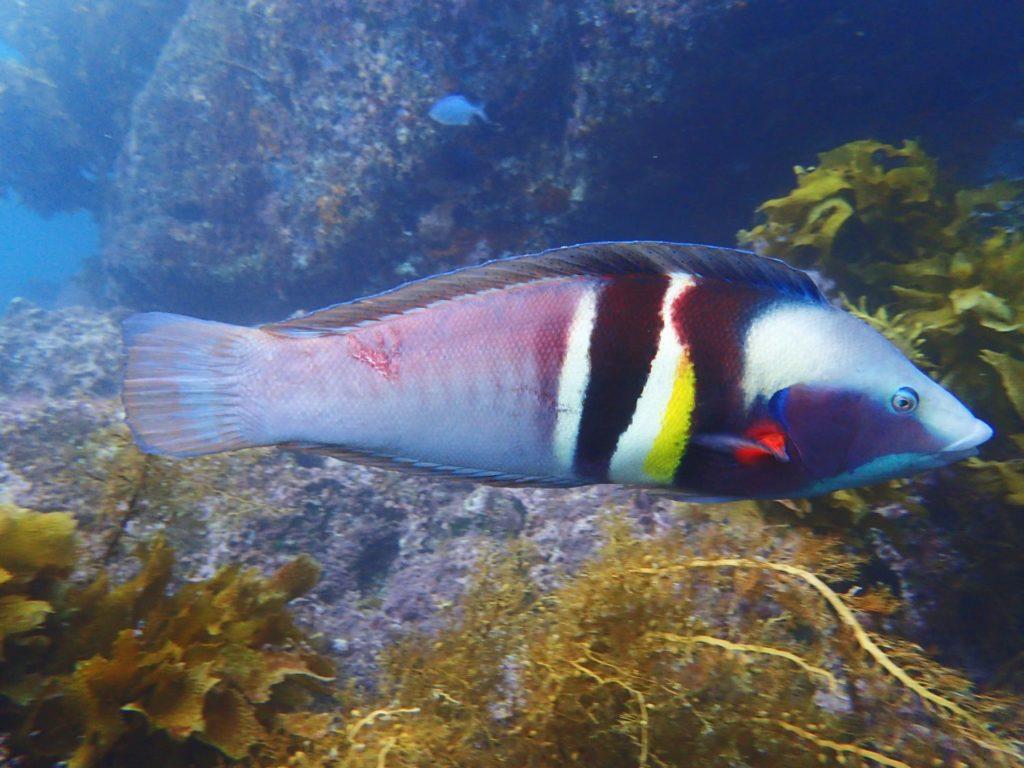 Tutukaka unter dem Meeresspiegel